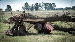 Un tornado arrasó con árboles, postes y techos en Trenque Lauquen