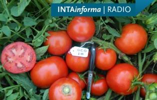 Avanza el proyecto de un polo de producción de tomate