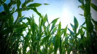 Prevén una cosecha gruesa con más de 9 millones de hectáreas sembradas