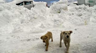 El alud de nieve que sepultó un hotel podría dejar el saldo de 30 muertos