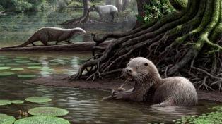 Descubren en China restos de una nutria prehistórica gigante de casi dos metros