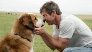 Dennis Quaid negó que haya maltrato animal en su nueva película