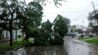 En Mar del Plata el temporal dejó más de 40 evacuados y 220 árboles caídos
