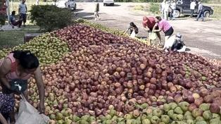 """La UNLP advirte que la situación de los productores es """"desesperante"""" en el cinturón verde platense"""