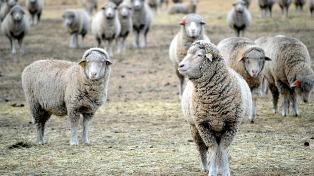 La sequía y su impacto en esta zafra preocupa a los productores del sector ovino