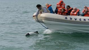 Los delfines patagónicos ofrecen su amistosa relación con los navegantes