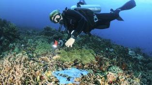 """Científicos encuentran """"niveles alarmantes de contaminación"""" en el océano"""