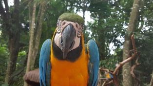 El Parque Das Aves de Foz de Iguazú, un atractivo imperdible del circuito Cataratas