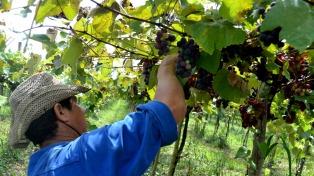 Chubut proyecta el desarrollo de la Ruta del Vino como nuevo atractivo turístico