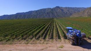 Argentina tendrá una cosecha de uvas superior a la esperada para 2018