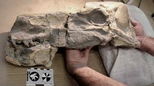 Presentarán el dinosaurio más antiguo hallado en Neuquén