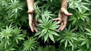 Una clínica de cannabis medicinal funcionará en Mendoza