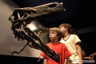 Exhibieron hallazgos paleontológicos en el Día Internacional del Fósil