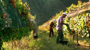 Viñedos, termas y paisajes en un recorrido por el norte riojano