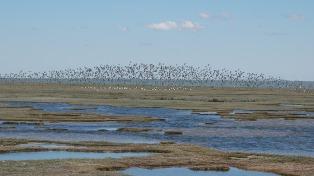 Diez localidades patagónicas se reúnen por la conservación de sus reservas naturales urbanas