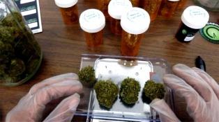 Una empresa internacional quiere participar en la producción de cannabis medicinal