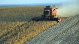 Simplifican las exigencias a productores y operadores de granos