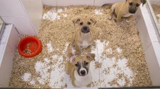 La adopción responsable de mascotas, un acto de amor y compromiso