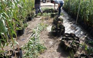 La provincia aumentará este año sus plantaciones forestales