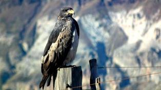 El avistaje de aves, otro atractivo turístico en la Comarca Andina
