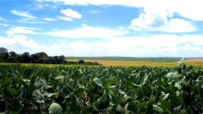 Advierten que por el último temporal podrían perderse 500 mil hectáreas de soja en la zona núcleo