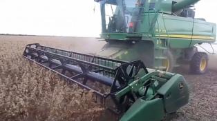 Prevén cosecha récord de maíz de 12 millones de toneladas en zona núcleo