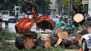 Árboles caídos y zonas sin luz por las fuertes lluvias en la Ciudad de Buenos Aires y el conurbano