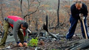 Voluntarios plantaron 130 mil árboles para reforestar un bosque quemado