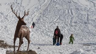Bariloche: consideran que la mayor conectividad aérea incrementará en un 10% la llegada de turistas