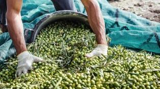 Alertan sobre la caída de la producción en el sector olivícola