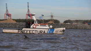 Ya no quedan esperanzas para la ballena varada desde hace cuatro días