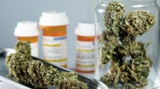 Usuarios de cannabis medicinal reclaman la reglamentación de la ley y que se incluya el autocultivo