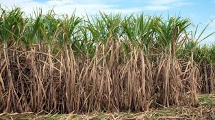 Advierten que gravar las bebidas azucaradas afectará la rentabilidad de los ingenios
