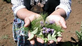 El Senasa autorizó a mapuches a ingresar al país medicinas ancestrales