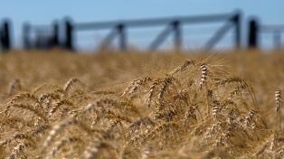 Los productores bonaerenses contarán con el análisis gratuito del trigo