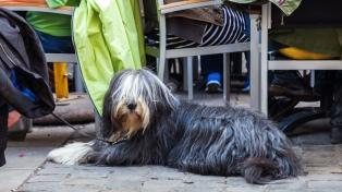 Bajarán impuestos a quienes adopten animales de refugios
