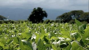 La mejora climática permite un buen avance en la siembra de soja