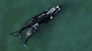 La Argentina avanza hacia la ampliación de las zonas de protección marinas