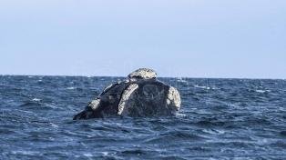 Avistajes embarcados de ballenas: un contacto muy cercano con los gigantes del mar