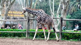 El Concejo Deliberante aprobó transformar el zoológico en un bioparque