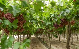 Comienza a regir el nuevo seguro agrícola que cubrirá por heladas y granizo a 16 mil productores de la provincia