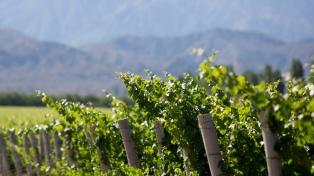 Ofrecen actividades especiales para conocer las rutas del Olivo y del Vino