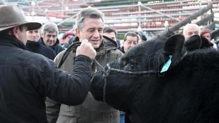 Un toro de la raza Angus fue el primer animal en llegar a  la Rural