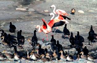 Países de la región se debatirán en La Paz sobre la conservación de la fauna silvestre