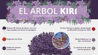 El árbol Kiri: una especie contra la contaminación y el cambio climático