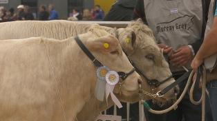 La Rural ya galardonó a todos los grandes campeones de la edición 2019