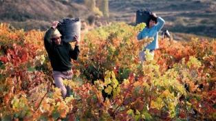 Enólogos afirman que la cosecha 2019 fue la mejor de las últimas décadas