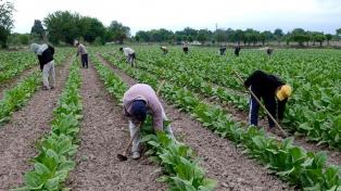 Distribuyeron más de $29 millones entre los productores tabacaleros