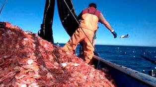 La pesca de langostino hace repuntar la actividad pesquera provincial