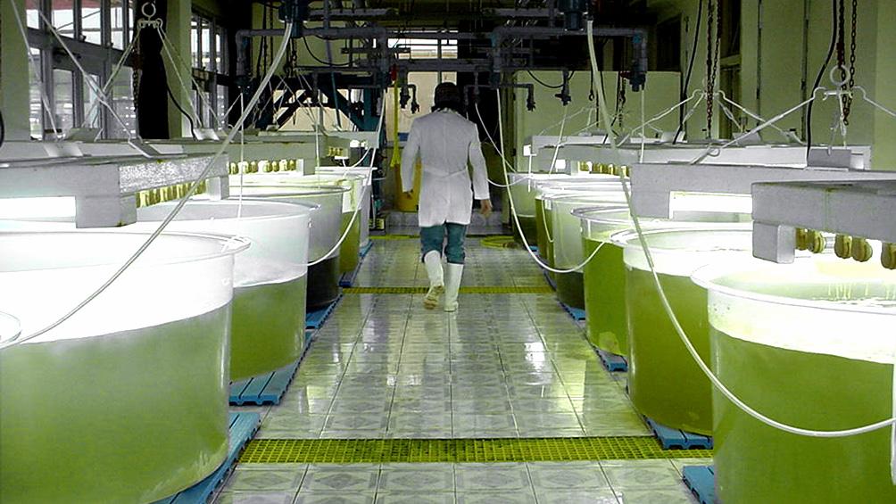 El sector de biocombustibles evitó importaciones por US$ 27.000 millones en diez años